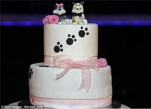 這隻西裝鼻挺的帥狗正在等待美麗新娘的到來,準備在百人面前浪漫成婚。