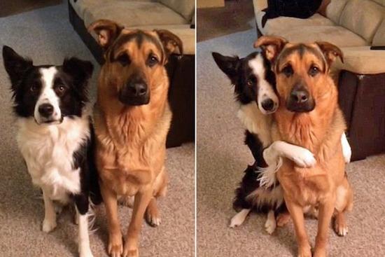 加拿大两宠物狗亲密拥抱暖化人心