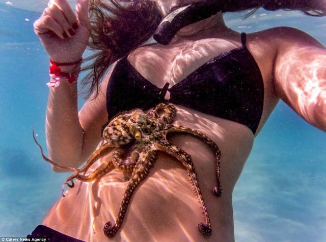 美女淺灘游泳奇遇,被它們又抓屁股又襲胸!